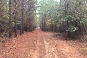 Little River Turnkey Hunting Property in Taliaferro, GA (10 of 35)