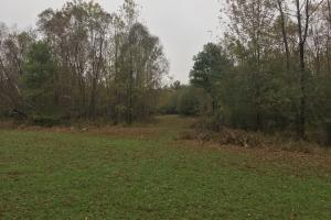 Little River Turnkey Hunting Property in Taliaferro, GA (17 of 35)