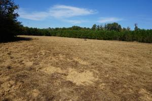 <p>Large Food Plot</p>
