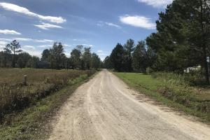 Loop Road Hunting and Timber Tract - Columbus County NC