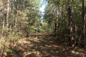 Loop Road Hunting and Timber Tract in Columbus, NC (3 of 10)