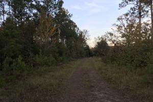 Lake Waccamaw Hunting Land - Columbus County NC