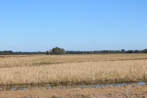 Southwest La. 556 Rice and Crawfish Farm Investment - Allen Parish LA