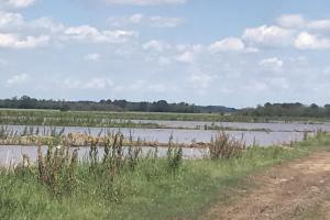 Southwest La. 556 Rice and Crawfish Farm Investment in Allen, LA (23 of 23)