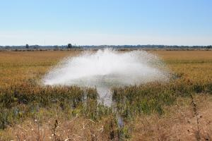 <p>Plenty of water for the rice and crawfish</p>
