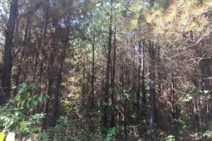 Gore Springs Timber & Hunting Land - Grenada County MS