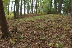 Gentle knolls for building, Shelton Laurel Creek Timber and Homestead Land (10 of 22)
