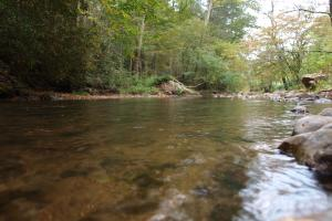 NC stocked trout stream with Brook, Brown, and Rainbow Trout, Shelton Laurel Creek Timber and Homestead Land (5 of 22)