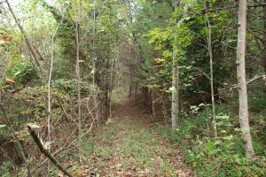 Trails for ATV, Hiking, Horseriding, Shelton Laurel Creek Timber and Homestead Land (9 of 22)