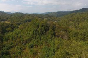 Timber, privacy and views, Shelton Laurel Creek Timber and Homestead Land (6 of 22)
