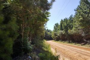 160 Acre Hunter's Paradise/Timber Investment in Polk, TX (12 of 15)