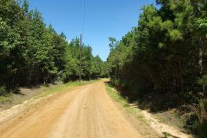 160 Acre Hunter's Paradise/Timber Investment in Polk, TX (5 of 15)
