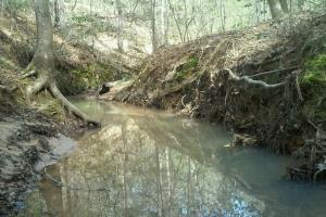 160 Acre Hunter's Paradise/Timber Investment in Polk, TX (2 of 15)