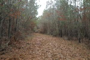 160 Acre Hunter's Paradise/Timber Investment in Polk, TX (10 of 15)
