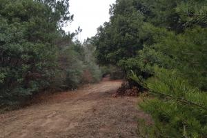 160 Acre Hunter's Paradise/Timber Investment in Polk, TX (6 of 15)
