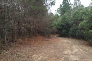 160 Acre Hunter's Paradise/Timber Investment in Polk, TX (13 of 15)