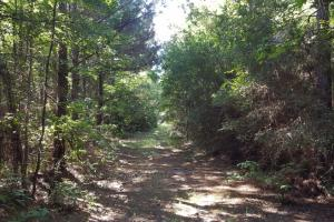 160 Acre Hunter's Paradise/Timber Investment - Polk County TX