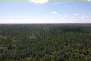 160 Acre Hunter's Paradise/Timber Investment in Polk, TX (8 of 15)