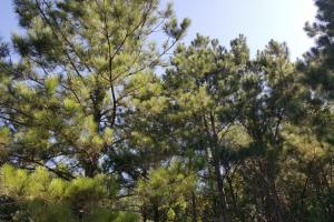 160 Acre Hunter's Paradise/Timber Investment in Polk, TX (14 of 15)