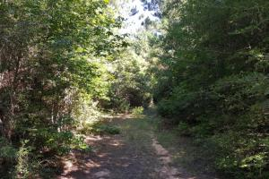 160 Acre Hunter's Paradise/Timber Investment in Polk, TX (4 of 15)