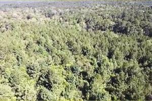 160 Acre Hunter's Paradise/Timber Investment in Polk, TX (9 of 15)