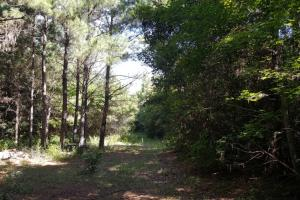 160 Acre Hunter's Paradise/Timber Investment in Polk, TX (11 of 15)