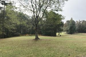 Sipsey Valley Recreational Tract in Tuscaloosa, AL (30 of 48)