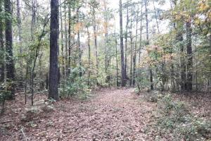 Sipsey Valley Recreational Tract in Tuscaloosa, AL (4 of 48)