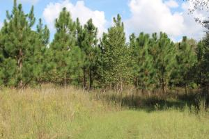 Gene Howard Road Homesite - Jefferson County GA