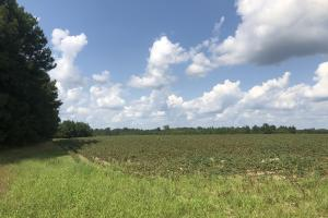 Gifford 38 AC Hunting & Farming Land - Hampton County SC