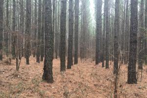 Small Hunting Property with Timber in Wilkes, GA (5 of 15)
