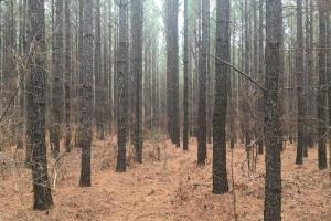 Small Hunting Property with Timber in Wilkes, GA (3 of 15)