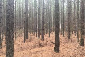 Small Hunting Property with Timber in Wilkes, GA (2 of 15)