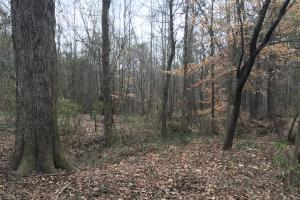 Small Hunting Property with Timber in Wilkes, GA (10 of 15)