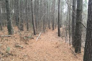 Small Hunting Property with Timber in Wilkes, GA (8 of 15)
