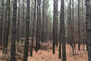 Small Hunting Property with Timber in Wilkes, GA (4 of 15)