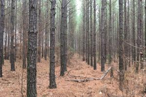 Small Acreage Hunting Tract with Timber - Wilkes County GA