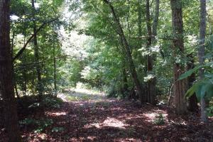 CRENSHAW COUNTY HUNTING AND TIMBER INVESTMENT - Crenshaw County AL