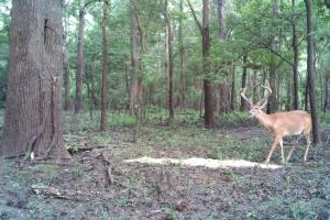 Becks Bay Hunting Club Share Woodville, MS - Wilkinson County MS