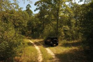 Large Wooded Ranchettes - 20 in Walker, TX (3 of 20)