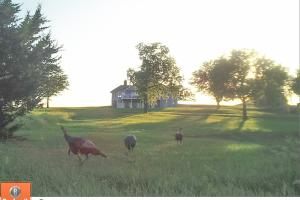 Burlingame Dream Home and Acreage in Osage, KS (72 of 73)