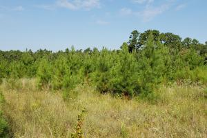 Large Wooded Ranchettes - 26 in Walker, TX (15 of 20)