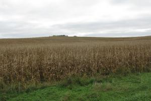 North Earling 50 acres of Farm Land - Shelby County IA