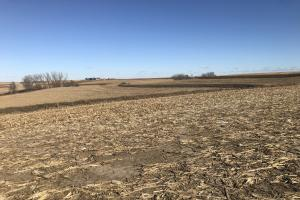 North Earling 50 acres of Farm Land.  (2 of 6)