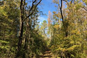 Reids Creek Woodlands and Fields in Abbeville, SC (18 of 37)