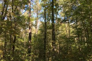 Reids Creek Woodlands and Fields in Abbeville, SC (6 of 37)