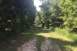 Beautiful Timber Land/Recreational Property & Cabin in Holmes, MS (48 of 56)