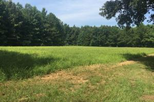 Food Plot Site (13 of 56)