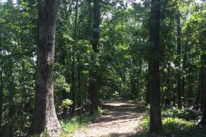 Beautiful Timber Land/Recreational Property & Cabin in Holmes, MS (53 of 56)