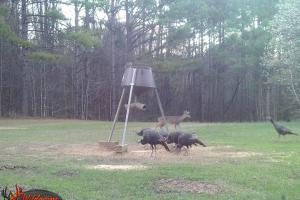 Feeder with turkey and deer (20 of 56)